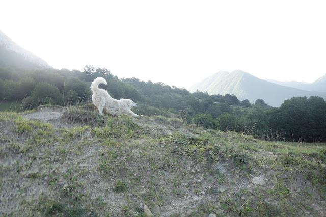 monte marsicano pastore abruzzese
