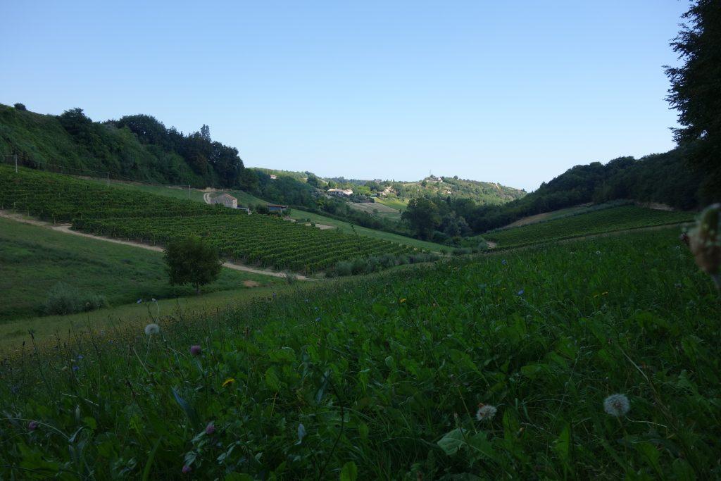 visiter les marches vin