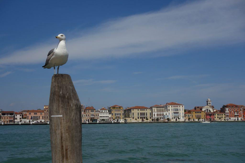 guide touriste venise